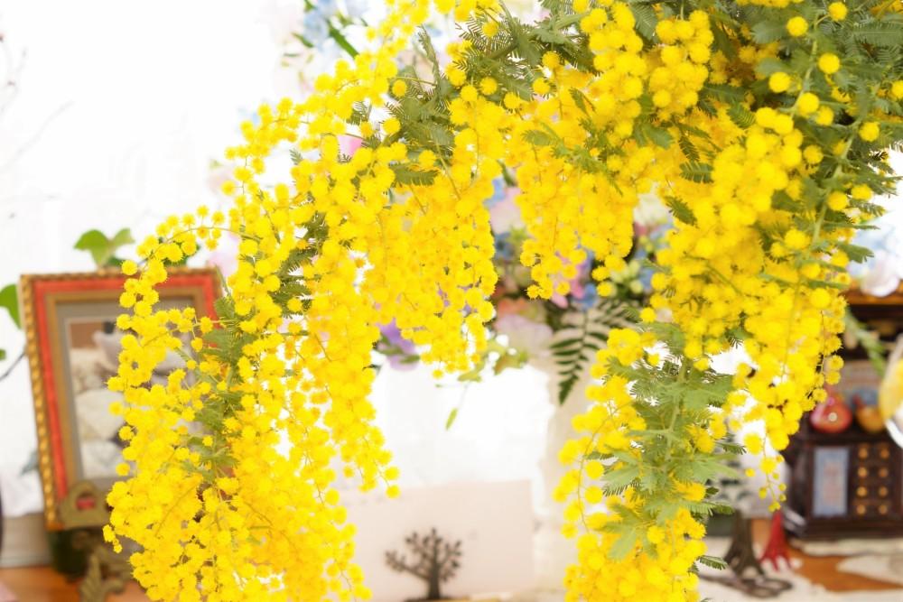 春イタリアン